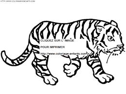 coloriage en ligne tigre ã dent de sabre