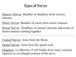 the nervous system ppt download