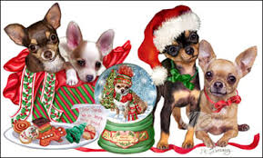 shop for cards chihuahua cards