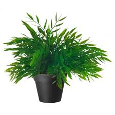 Best Small Bedroom Plants Air Purifying Plants For Bedroom O Houseplants Destress Home