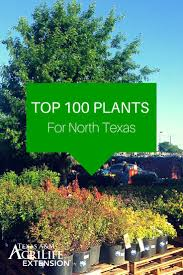 native plant guide best 25 texas plants ideas on pinterest texas gardening texas