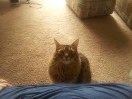 Sad Kitty Meme - sad kitty meme generator captionator caption generator frabz