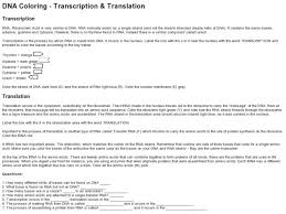 dna coloring transcription and translation 9th higher ed