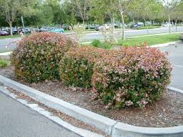 ornamental shrubs for pa landscaping robinson landscape