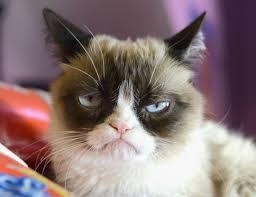Kitty Meme Generator - grumpy cat meme template cat best of the funny meme