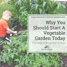 Growing Your Own Vegetable Garden by Why You Should Start A Vegetable Garden Today Dgf Landscapes Mackay
