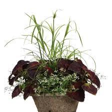 Plants That Need No Light Diamond Frost Euphorbia Hybrid Proven Winners