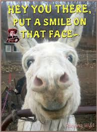 Funny Donkey Memes - pin by cm on donkeys pinterest donkey animal and horse