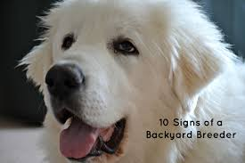 10 signs of a backyard breeder it u0027s dog or nothing