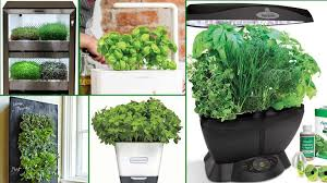 Indoor Herb Garden Kit Indoor Herb Garden Kits Even Die Hard Plant Killers Can U0027t Mess Up