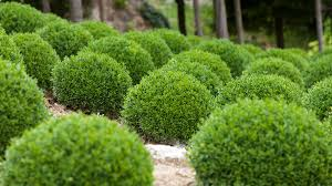 Topiarys 10 Things Topiary Lovers Should Know Grow Beautifully