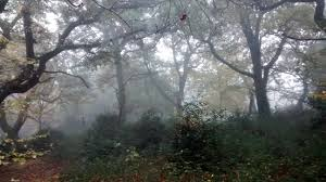 forest glade mystique 1