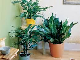 good houseplants for low light easy care houseplants sunset magazine
