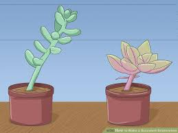 Succulent Boutonniere How To Make A Succulent Boutonniere 13 Steps With Pictures