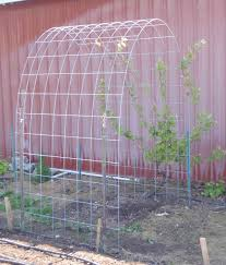 simple arched trellis for grapes or pole beans daily