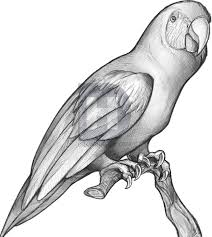 how to sketch a parrot step by step drawing guide by darkonator