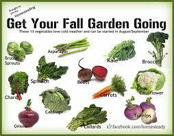 things to plant in a vegetable garden gardensdecor com