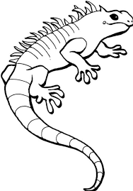 iguana coloring page 18671