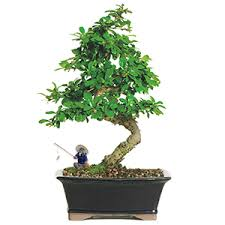 garden decor bonsai figurines and house supplies bonsai