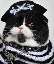Cat Halloween Costumes Cats 100 Cats Costumes Images Animals Happy
