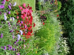 australian native garden plants helmsley walled garden wellywoman