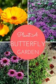 159 best gardening for butterflies images on pinterest butterfly