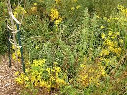 oz native plants tnsynativeplants tennessee smart yards native plants