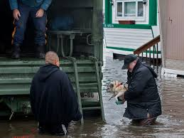 rush is on to rescue animals stranded in sandy u0027s wake today com