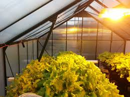 hydroponics grow lights organics in ohio gardening indoor