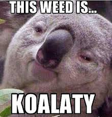 a koala was sitting in a tree smoking a joint when a lizard walks