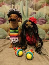 Halloween Costumes Mexican 60 Spooky Cute Halloween Costumes Pets Designbump