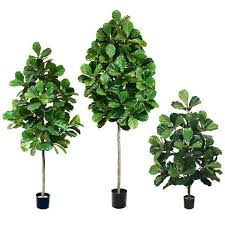 fiddle leaf fig amazing green inc grass plant artificial