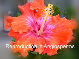 iix reproduction in flowering plants reproduction in angiosperms