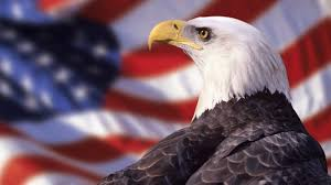 America Eagle Meme - murica bald eagle the best eagle of 2018