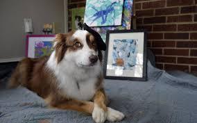 australian shepherd jobs this charlotte pooch paints brings you beer charlotte observer