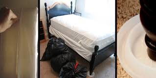 Will Heat Kill Bed Bugs Bed Bug Control Methods