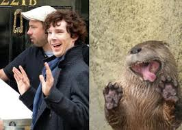 Cumberbatch Otter Meme - when otters attack reply anonymously button thread page 23