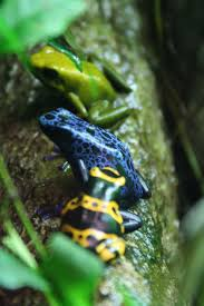 72 best what the frog is this images on pinterest lizards