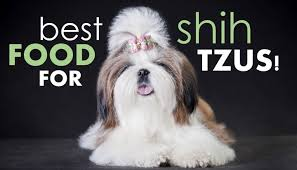 best dog food for shih tzus how to pick the good shih herepup