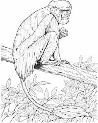 monkey coloring sheet newcoloring123