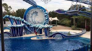 Map Of Seaworld Orlando by Dolphins Show Sea World Orlando 2017 Youtube