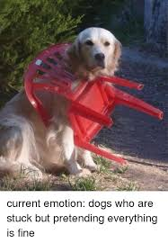 Everything Is Fine Meme - current emotion dogs who are stuck but pretending everything is