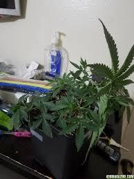1st grow collective u0027s coco gorilla glue indoor grow journal