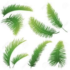 palm tree leaves clipart clipartsgram com
