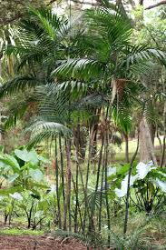 palm sunday palms for sale where palm sunday palms come from