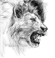 lion sketch by kalicothekat on deviantart