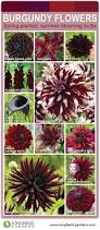 105 best wedding flowers images on pinterest burgundy bouquet