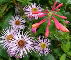 nc native plants fall in the pollinator garden north carolina cooperative extension