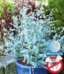 winterharte pflanzen balkon die besten 25 winterharte pflanzen ideen auf