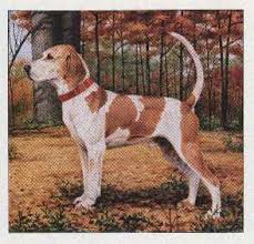 bluetick coonhound florida the coonhounds of america
